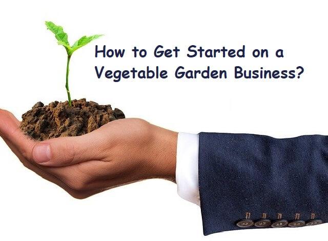 Vegetable Garden Business